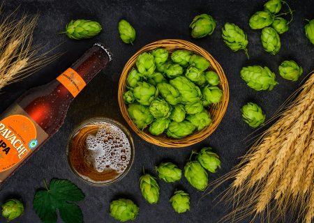 Lúpulo, a alma da cerveja: história do lúpulo, funções e benefícios dessa planta para o ser humano